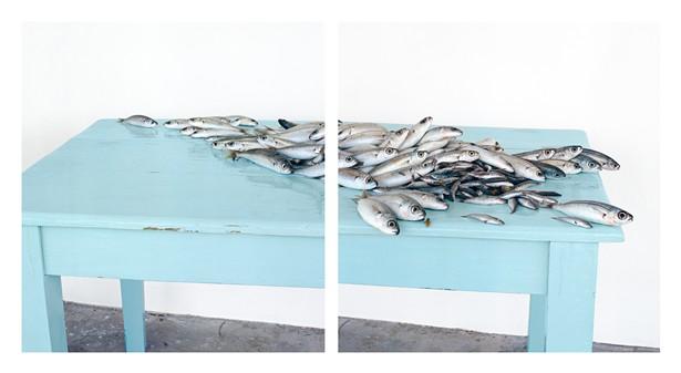 David Halliday, Fish on Blue, c.2013, archival pigment print