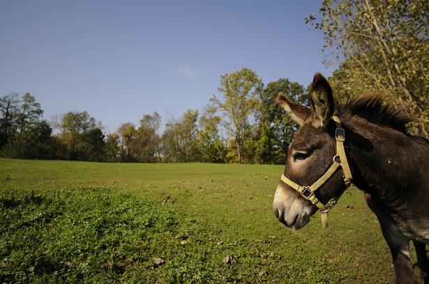 bf_animal_sanctuary_donkey.jpg