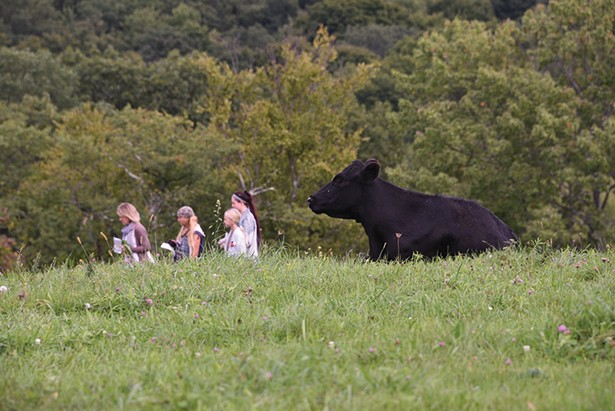 Collaborative Concepts, an outdoor sculpture exhibit, returns to the cow pastures of Saunders Farm for the 14th year.