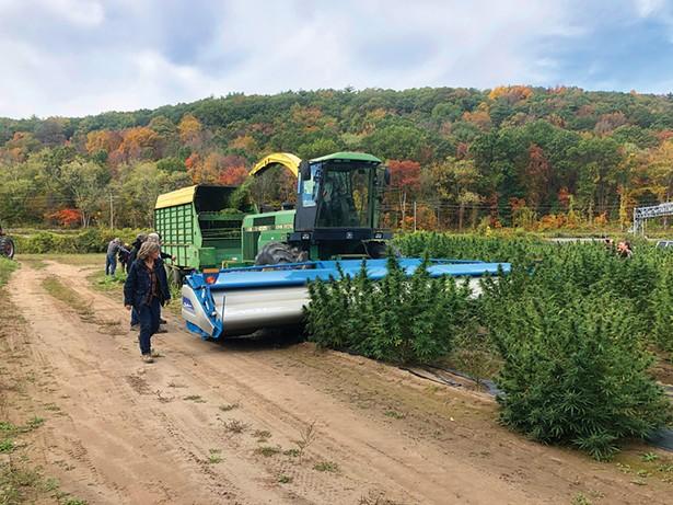 Amy Hepworth of Hempire State Growers and her crew harvesting hemp. - PHOTO: GERRY GRECO