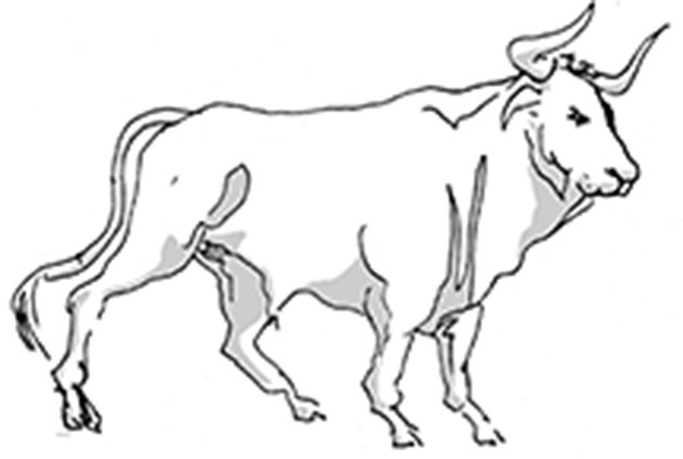 Horoscopes: Taurus