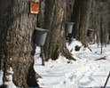 Sugaring Season in the Hudson Valley