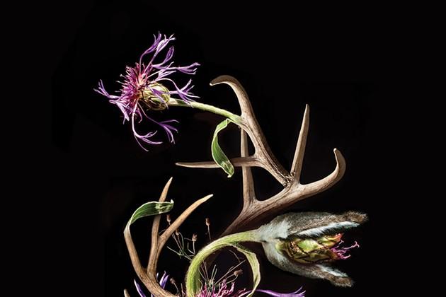 The Surreal Photography of Lisa DiLillo
