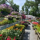 Plant Paradise: This Picturesque Nursery in Jewett is Worth a Trip