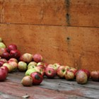 Celebrate Cider Week in the Hudson Valley Now Through October 17