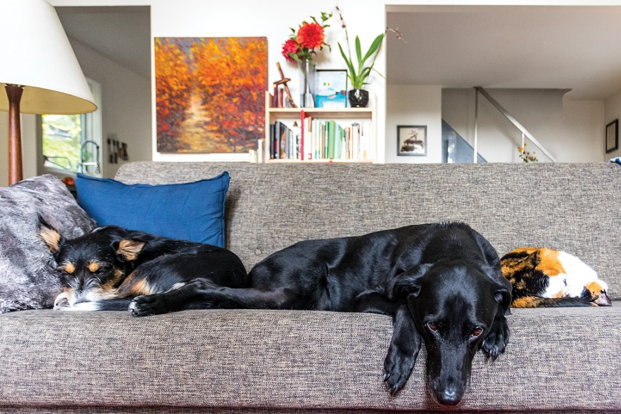 """The couch in Horowitz and Shea's living room is the center of family life, and a popular spot for both human and canine lounging. On the left, their puppy Quiddity naps, at the center Finnegan relaxes, and the family cat, Edsel Beezlebulb, curls up into a ball at the right. """"I think the special thing about dogs is how intimately we can be - in each other's spaces,"""" says Horowitz. """"It's very strange for me to ever be in a place where I don't have a dog."""" - WINONA BARTON-BALLENTINE"""
