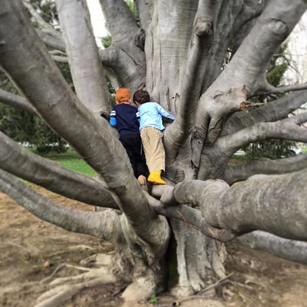 Preschoolers climb a tree outside the Frances Lehman Loeb Art Center at Vassar College - HILLARY HARVEY