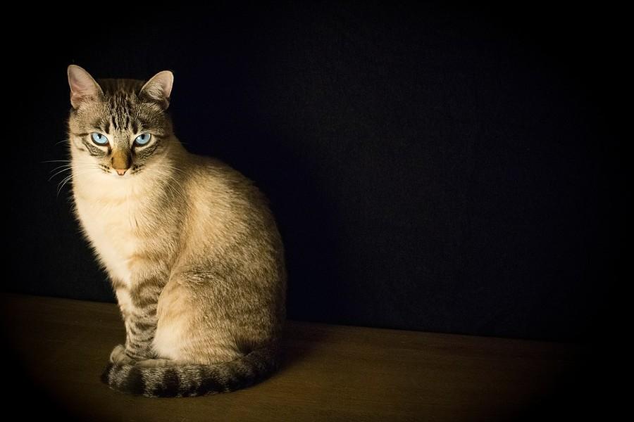 cat-2590467_960_720.jpg