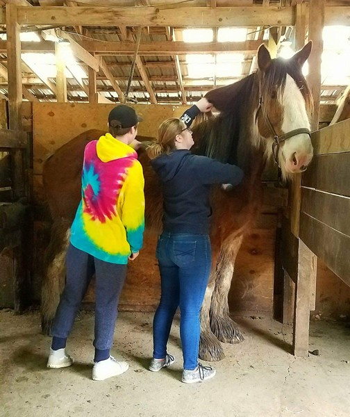 "Guests can sign up as ""Barn Buddies"" and get hands-on time with the horses."