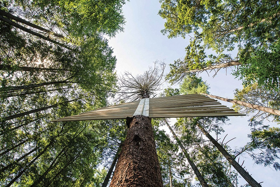 Rouse. Hemlock, steel connectors. A storm-damaged hemlock reconfigured to reflect trees' tendencies to send out warning signals when sensing danger. - PHOTO: KARI GIORDANO