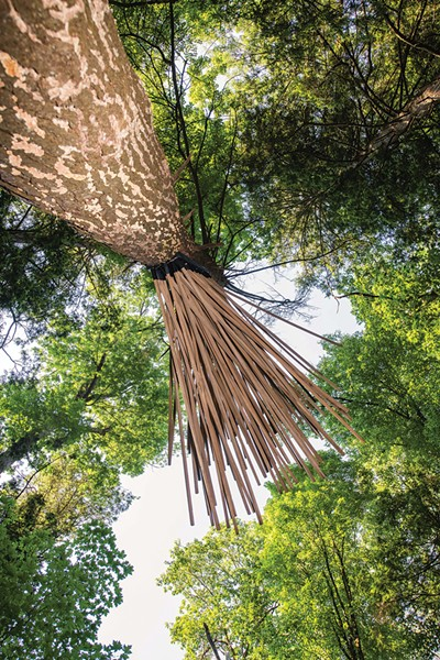 Singing Tree, made from a standing dead hemlock tree, is reconfigured as if singing to the surrounding forest. - PHOTO: KARI GIORDANO