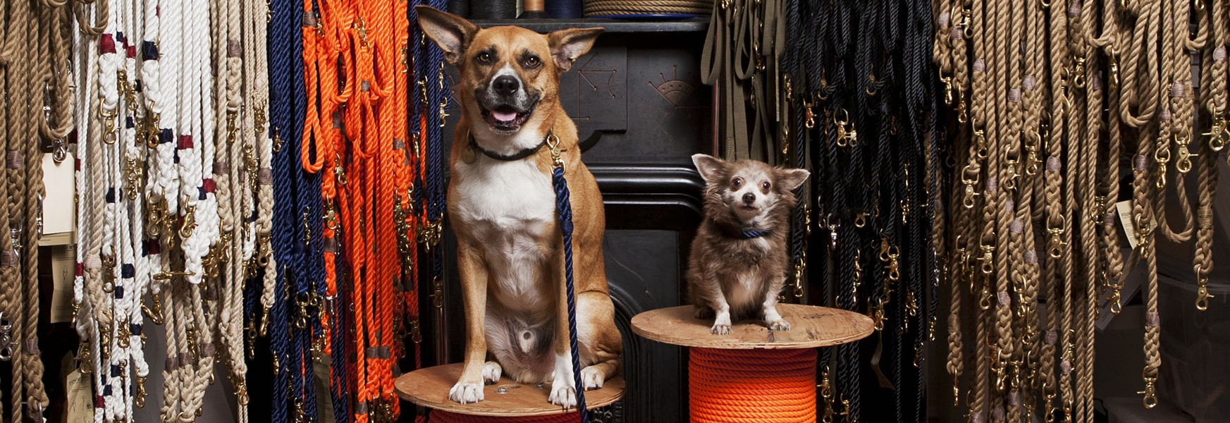 Two rescue dogs with their Found My Animal collars and leashes. - PHOTO BY TRE CASETTA, COURTESY OF FOUND MY ANIMAL