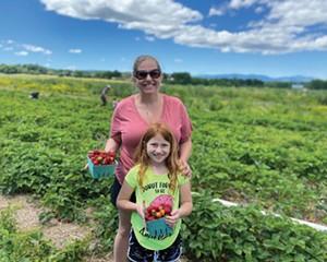 Strawberry picking at Kelder's Farm in Kerhonkson.