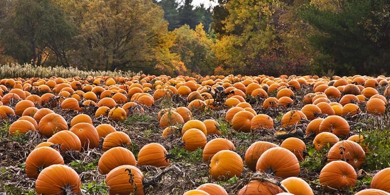 The Hudson Valley's Best U-Pick Pumpkin Patches