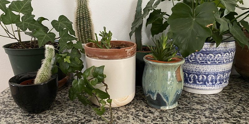 7 Boutique Plant Shops for All You Indoor Gardeners
