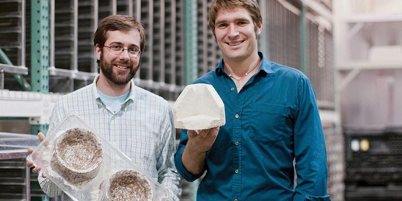 The Mycelium Revolution: Fungus-Powered, Eco-Friendly Design
