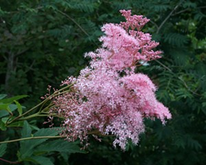 5 Sun-Loving Native Flowers in Bloom in the Hudson Valley