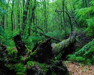 Biosphere Reserve Schorfheide Wilderness