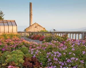 The Gardens of Alcatraz, San Francisco, California.