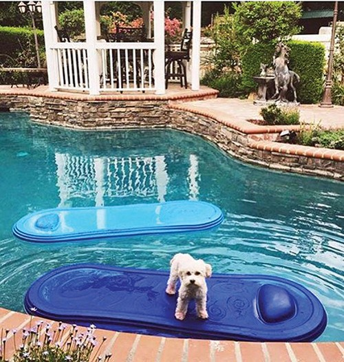 art-of-biz_aquajet_dog-in-pool-with-gazebo.jpg