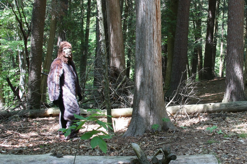 Sasquatch Sightings in the Hudson Valley | Outdoors | Hudson