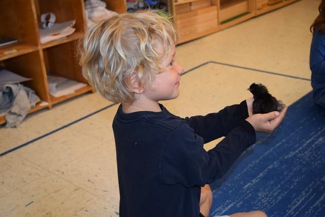 poughkeepsie_day_school_farm_learning4.jpg