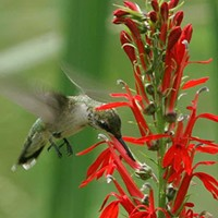 Turn Your Garden Into a Hummingbird Paradise With These 5 Native Plants