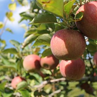 Poll: Fave Farms for Fall Fun