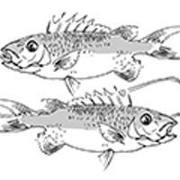 Pisces (February 19-March 20) for September 2015