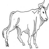 Taurus for December 2015