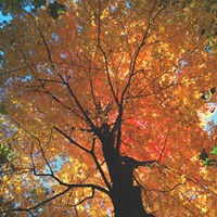 Editor's Note: Autumn's Tendrils