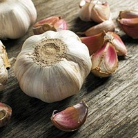Hudson Valley Garlic Festival 2018