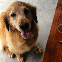 8 Dog-Friendly Bars In The Hudson Valley to Make Your #Pupstate Dreams Come True