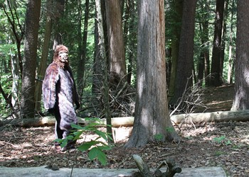 Sasquatch Sightings in the Hudson Valley