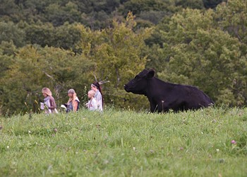 The Cow as Critic: Art and Animals on Saunders Farm