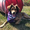 PuppyUp! Dog Walk 2020 @ Whitecliff Vineyard & Winery