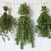 Preserving Kitchen Herbs @