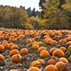 The Hudson Valley's Best U-Pick Pumpkin Patches