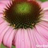 The Sacred Heart of Herbalism @