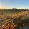 Fishkill Farms Fall Harvest Festivals @ Fishkill Farms