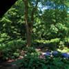 Shade Gardens: A Conversation with Victoria Coyne