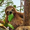 Poughkeepsie! Meet a Sloth! Natural History Exhibition! @ Mid-Hudson Civic Center