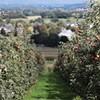 Heirloom Orchard Management Workshop Series @ Hudson Valley Research Lab, Inc