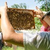 Conscious Beekeeping: Special Session for Beginners @ The Pfeiffer Center