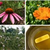 Herbal Workshop Series: Herbs for Children @ Poughkeepsie Farm Project