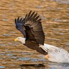 Eagle Watch Bus Tour @ Upper Delaware Visitor Center (Zane Grey Museum)