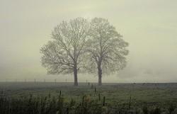 c7263568_two-trees-love-280x180.jpg