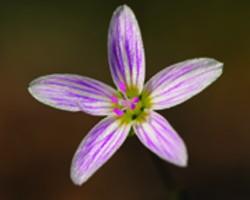 6eb54ac3_m_neil_o_donnel_spring_flower.jpg
