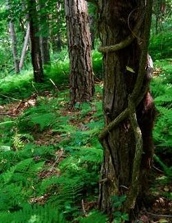 c080af83_trees.jpg