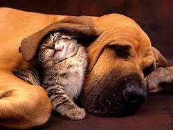 d4b3fdd6_dog_and_cat_4.jpg